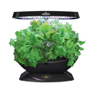 Black Indoor Herb Garden Kit Gift for Home Cooks